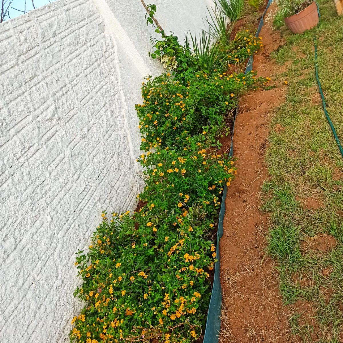 O jardim é cuidado diariamente pelos idealizadores do projeto
