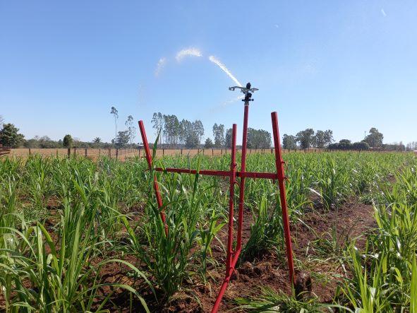 Capim-açu com sistema de irrigação. Pastagem irrigada é uma das variáveis da pecuária intensiva.  (Foto: Rildo Costa)