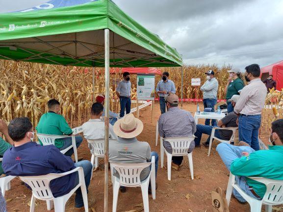 Evento Tecnoshow Milho 2021, da Casa do Adubo. Dias de Campo dedicados ao milho são eventos que atraem produtores na região de Cerejeiras. (Foto: Rildo Costa)