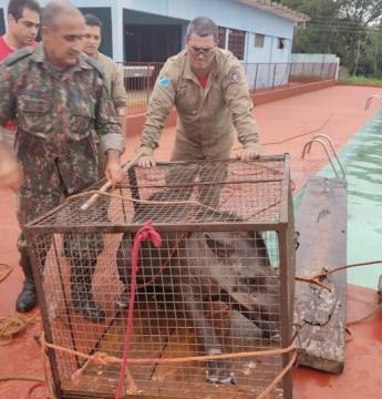 Anta com mais de 200 kg é resgatada após cair em piscina de clube
