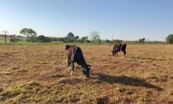 Produção de leite gera renda para pequenos produtores no campo e cria empregos na cidade em Cerejeiras