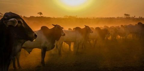 Valor Bruto da Produção Agropecuária rondoniense sobe para R$ 18,3 bilhões durante a pandemia