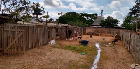 """VILHENA: IFRO apoia Associação """"Amor de Quatro Patas"""" nos cuidados de gatos e cachorros abandonados"""