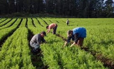 Fomento rural facilita acesso ao trabalho e obtenção de renda a famílias em situação de vulnerabilidade social