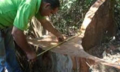 Período de restrição da extração de madeira dos projetos de manejo sustentável entra em vigor em 1º de janeiro de 2021