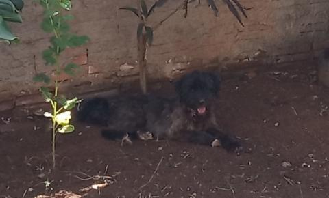 Exterminador de Animais ataca novamente em Cerejeiras