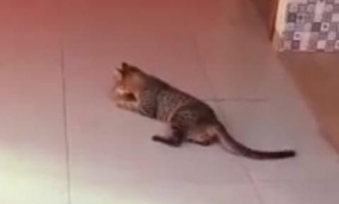 VÍDEO: Exterminador de Animais domésticos continua fazendo vítimas em Cerejeiras
