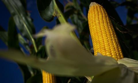 Estimativa da safra de grãos é de 254 milhões de toneladas