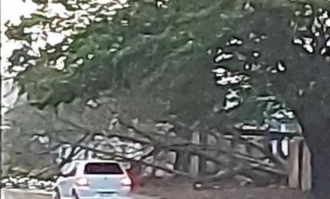 Fortes Chuvas derrubam árvore no quartel da PM