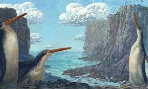 Fóssil revela espécie de pinguim gigante que vivia na Nova Zelândia
