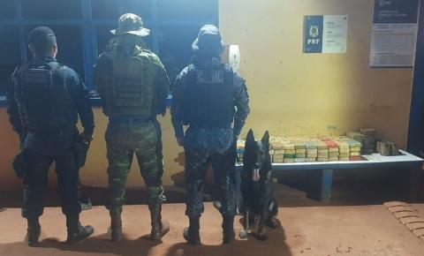 Cão policial encontra 116 kg de drogas em reboque de carro na em Rondônia