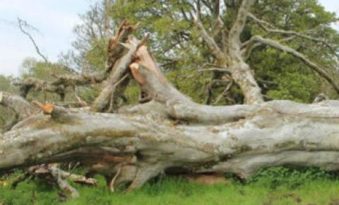 Trabalhador morre durante derrubada de árvore